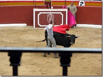Torero ärgert Toro