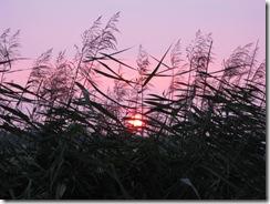 Sonnenuntergang an der Oste (11)