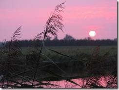 Sonnenuntergang an der Oste (12)