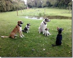 Leon, John Boy, Leya, Karla, Klobürste, Kiko (von links)
