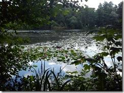 Holländer See (1)