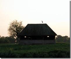 Storch am Abend