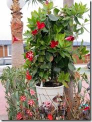 unser 'Weihnachtsbaum'