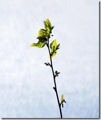 Frühlingserwachen (3)