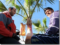 Palmenpflege (3)