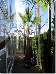 Palmenpflege (4)