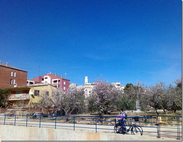 Blühende Mandelbäume in der Stadt