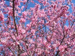 Mandelblütenfahrt nach Vilafamés (13)