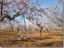 Mandelblütenfahrt nach Vilafamés (10)