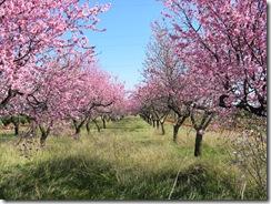 Mandelblütenfahrt nach Vilafamés (11)