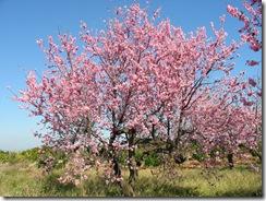 Mandelblütenfahrt nach Vilafamés (12)