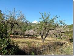 Mandelblütenfahrt nach Vilafamés (2)