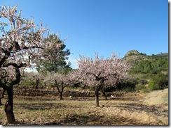 Mandelblütenfahrt nach Vilafamés (3)