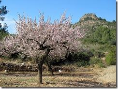 Mandelblütenfahrt nach Vilafamés (4)