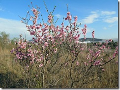 Mandelblütenfahrt nach Vilafamés (5)
