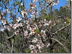 Mandelblütenfahrt nach Vilafamés (6)
