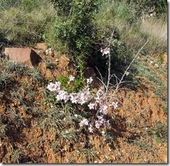 Mandelblütenfahrt nach Vilafamés (7)