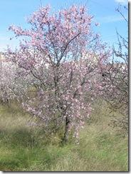 Mandelblütenfahrt nach Vilafamés (8)