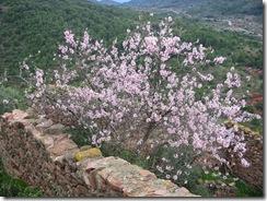 Mandelblütenfahrt nach Vilafamés (9)