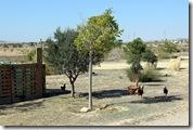 Stellplatz 'Rancho Buena Vista' (glückliche Hühner)
