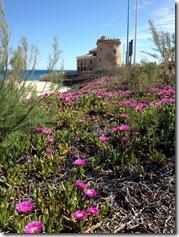 Torre de Horadada mit Strohblumen