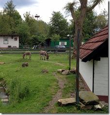Tierpark (1)
