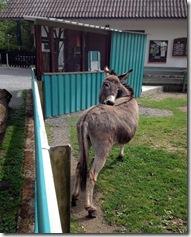 Tierpark (2)