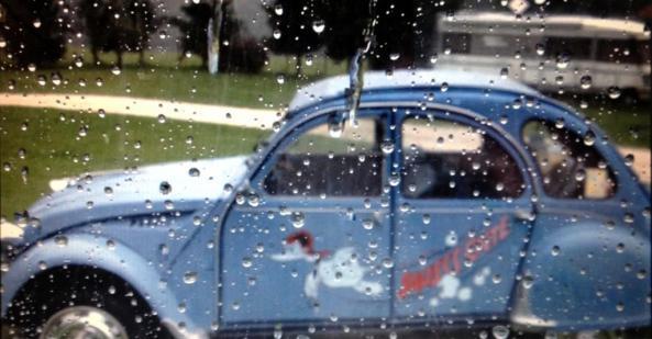 Enti im Regen