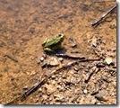 Frosch 1, sich sonnend