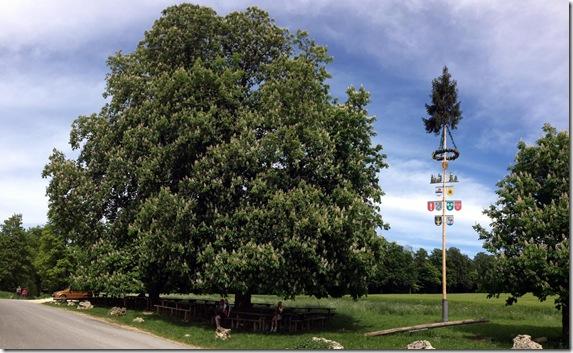 Biergarten Tauchenweiler mit Maibaum