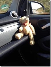 Beifahrer Fritzi (sonnt sich oder schläft?)