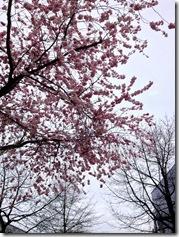Blütenträume
