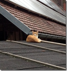 Katze auf dem ... Blechdach