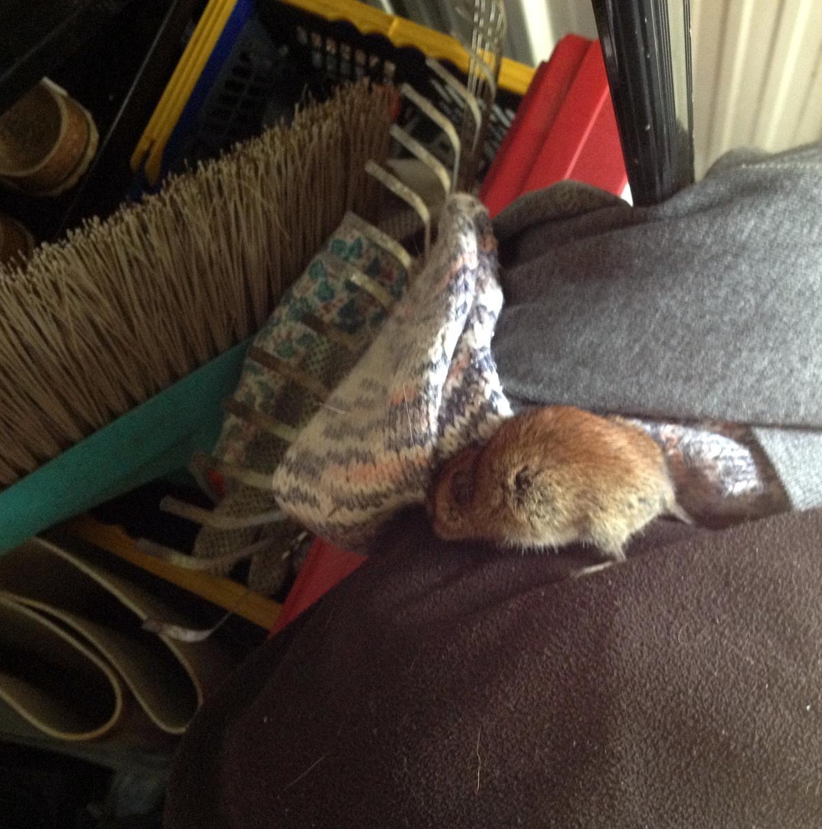 Mäuse im Haus  Oscarlotta on tour