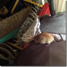 Mäusebeerdigung