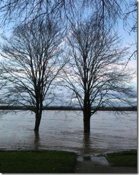 Hochwasser in Urmitz