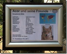 europäische Wölfe