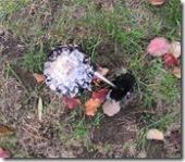 Pilze im Vorgarten